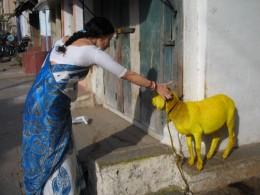 k with yellow goat